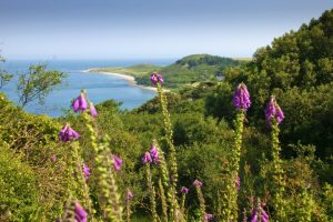 Herm cliff path walks