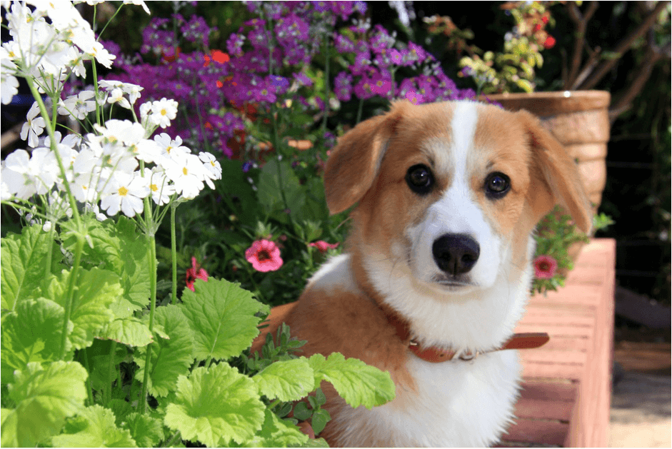 Dog with white and purple flowers